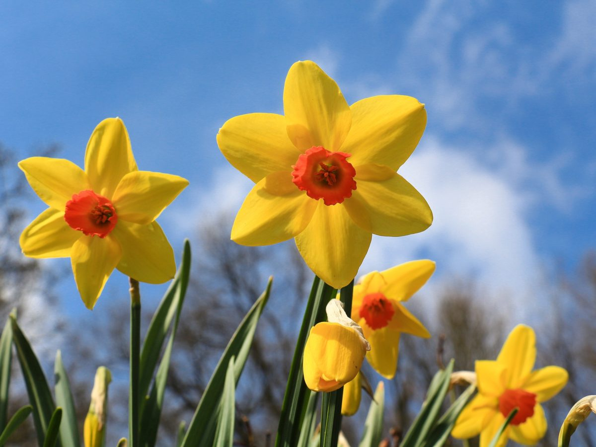 St David's Day Activities